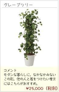 観葉植物(フロアー・リビング・ギフト)