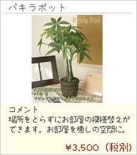 観葉植物(テーブル) 店長おすすめ