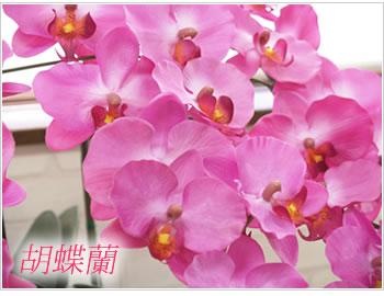 光の楽園 造花 人工観葉植物 光触媒 胡蝶蘭