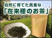 在来種のお茶