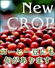 新豆「ニュークロップ」情報【8/14更新】