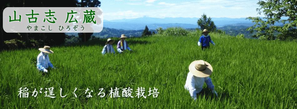 特別な栽培法で作った棚田米コシヒカリ三人娘