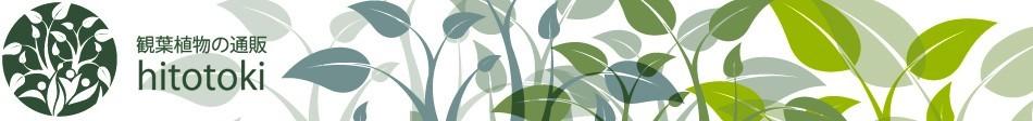 観葉植物の通販 HITOTOKI