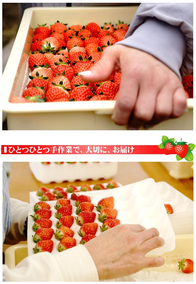 ブルーム/銀龍苺/苺/いちご/イチゴ