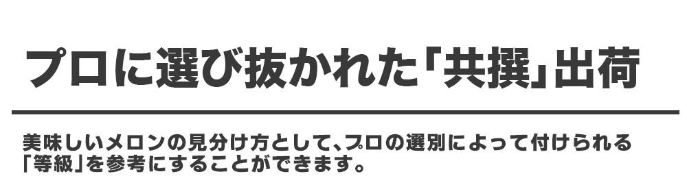 北海道 夕張メロン