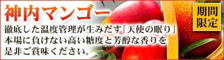 北海道産アップルマンゴー 神内ファーム 神内マンゴー