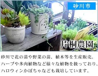 砂川市 片桐農園
