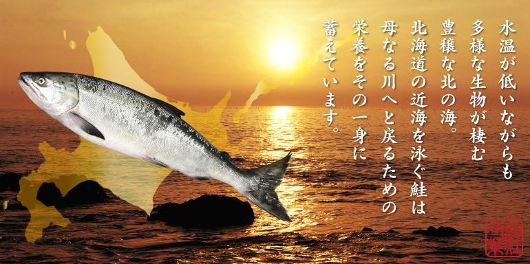 鮭と海のイメージ