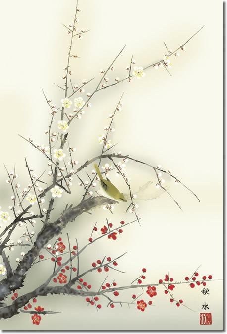 掛け軸-紅白梅に鶯/浮田秋水(尺五あんどん・桐箱・風鎮付き)花鳥画掛軸