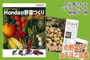 藤田智 野菜づくりなるほど図鑑