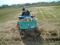 有機米コシヒカリ栽培田にEMぼかし散布中