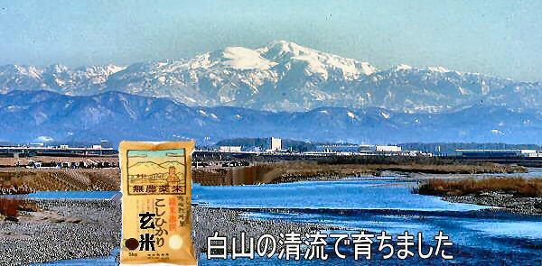 白山の清流で育った安全安心の無農薬栽培米