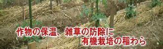 作物の保温、雑草の防除に有機栽培の稲わら
