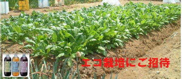 EM農法エコ栽培にご招待