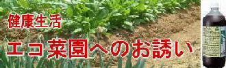 無農薬エコ菜園での家庭菜園へのお誘いEM1号