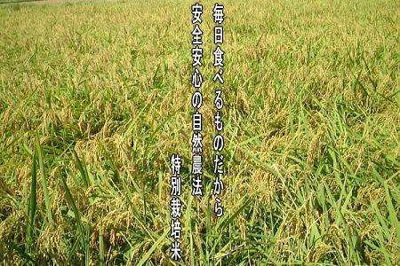 自然農法特別栽培米コシヒカリ「自然の恵み」