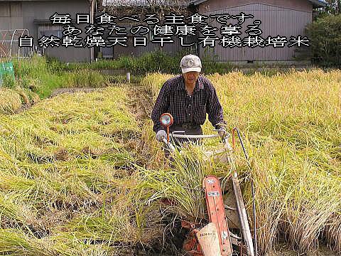 バインダーによる稲刈り