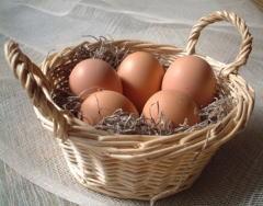 善玉菌がいっぱいの美味しい卵