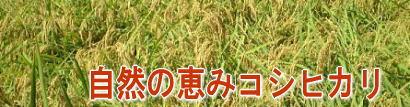 特別栽培米「自然の恵み」コシヒカリ