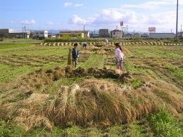 自然乾燥天日干有機栽培米、僕も私もお手伝い