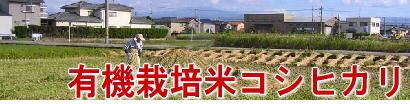 有機栽培米コシヒカリ