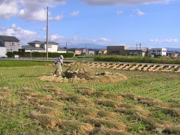 天日干有機米のにゅう積み