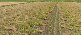 無農薬有機栽培天日干
