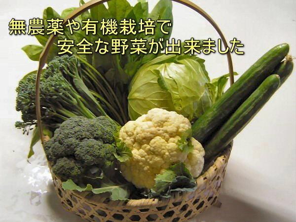 EM農法で無農薬や有機栽培の安全な野菜が出来ました