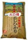 お試し版のお米送料無料でお届けします。