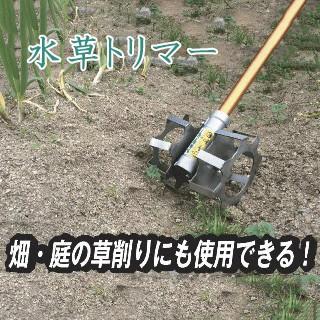 水草とりまー