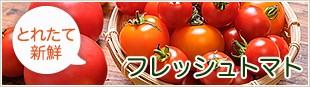 とれたて新鮮フレッシュトマト