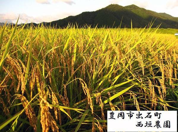 """西垣農園『こうのとり物語』夢ごこち""""自然農法米(農薬不使用)""""白米"""