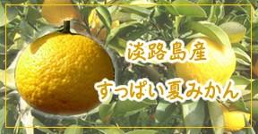 淡路島・夏みかん