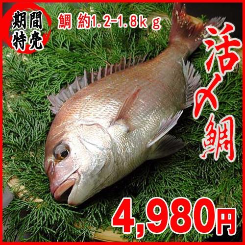 真鯛 活〆 約1.5-1.8kg