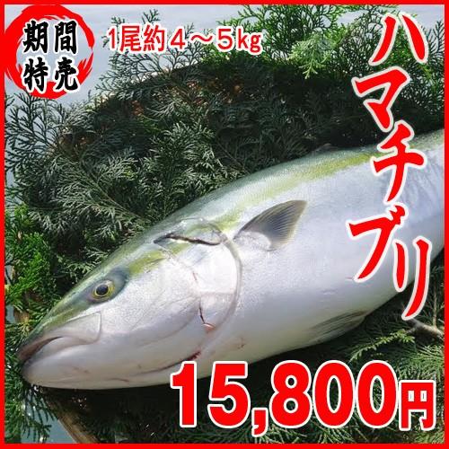 ぶり4〜5kg