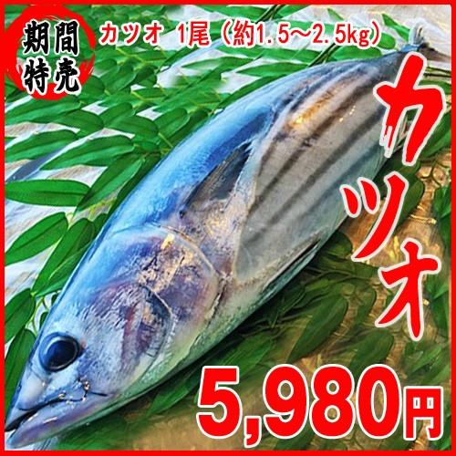 カツオ 1尾(約1.5〜2.5kg)