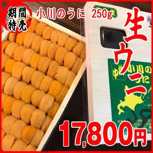 小川海胆 250g