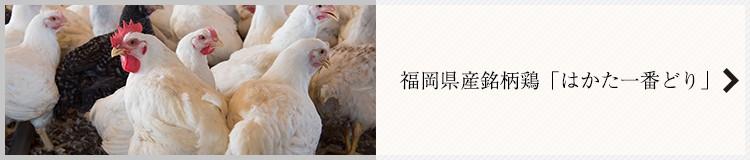 福岡県産銘柄鶏「はかた一番どり」