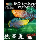 熱帯魚(生体・用品)