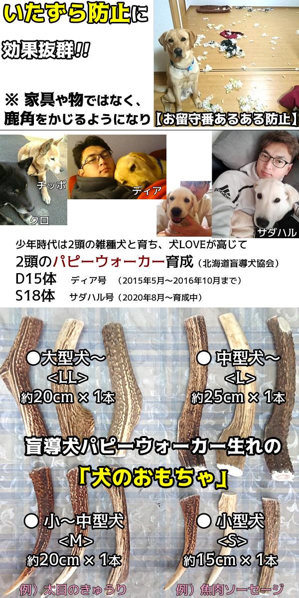 北海道盲導犬協会でパピーウォーカーを2015年〜2016年9月までボランティアしてました