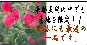 贈答用 福島産サンふじリンゴ