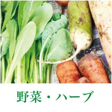 野菜・ハーブ
