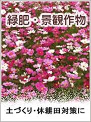 緑肥・景観作物の種の通販ページ