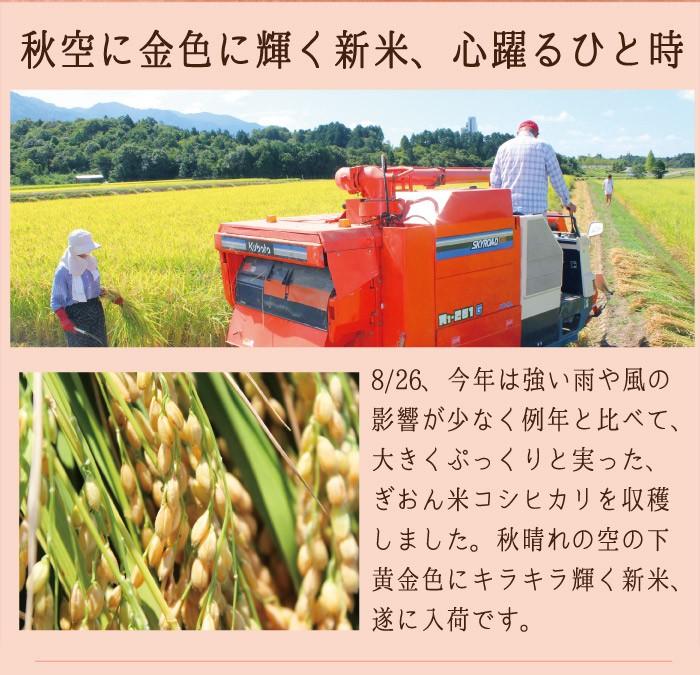 28年産ぎおん米も豊かに実りました