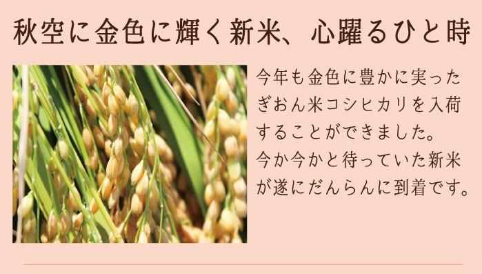 29年産ぎおん米も豊かに実りました