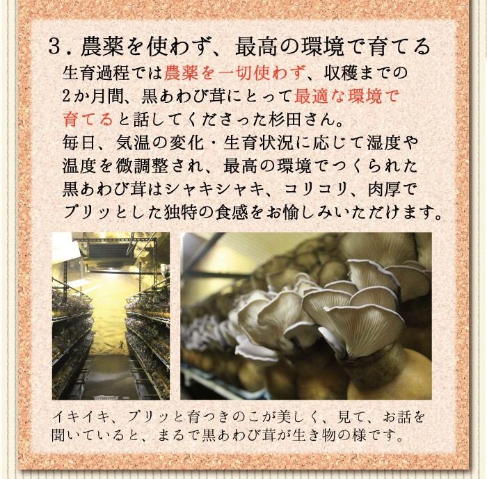 あわび茸3