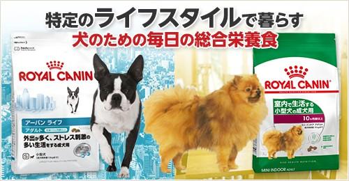 特定のライフスタイルで暮らす犬のための毎日の総合栄養食