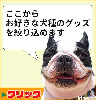 犬種名検索