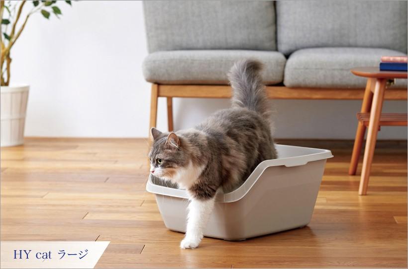 HY Cat