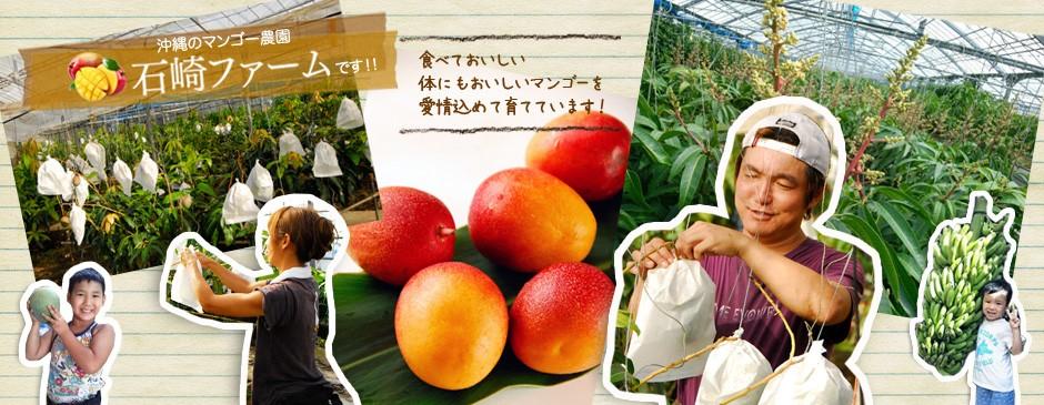 沖縄のマンゴー農園「石崎ファーム」です